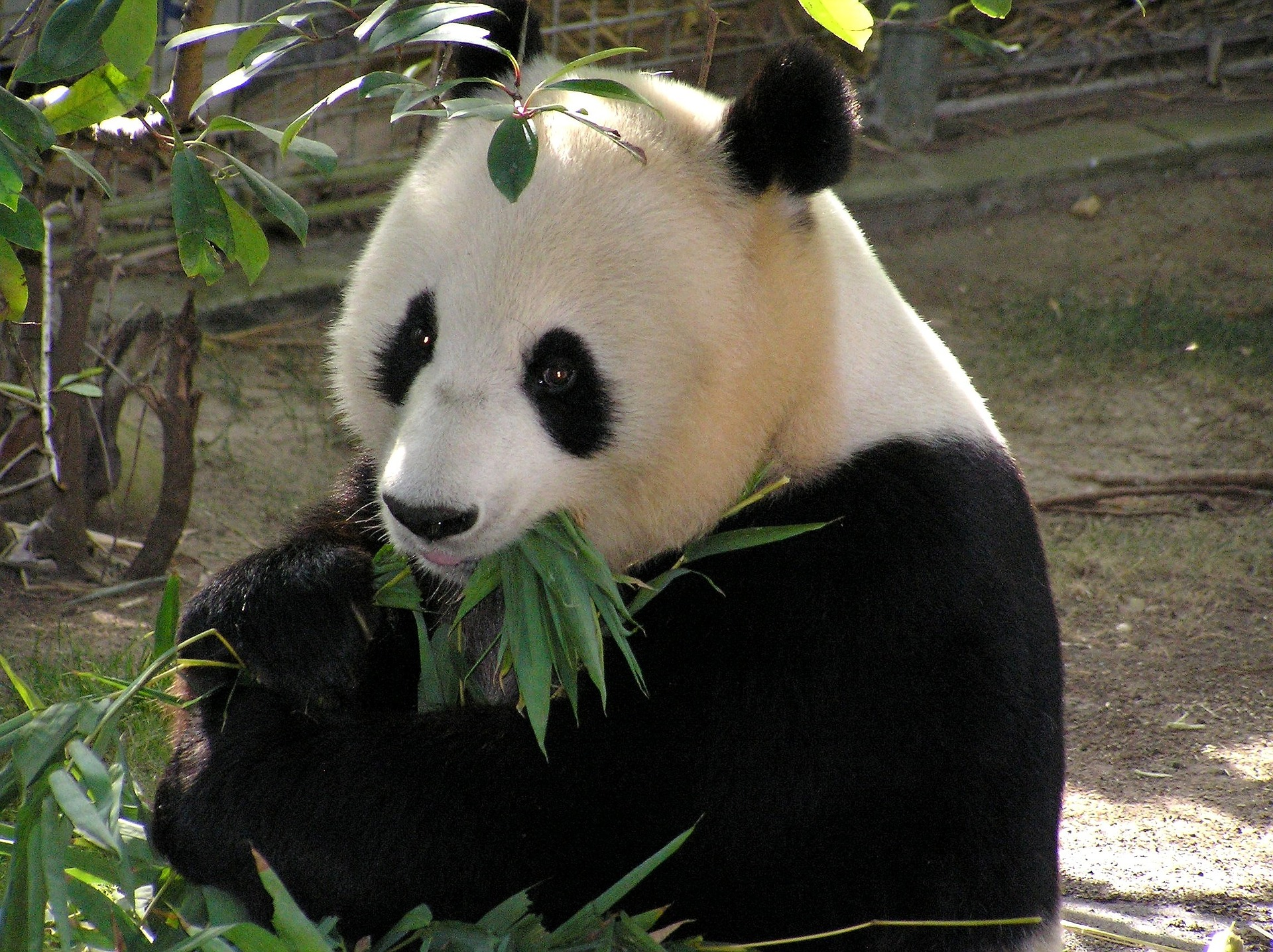 Getting Started with Pandas in Python